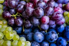 крупный план предпосылки осени красит красный цвет листьев плюща померанцовый Разнообразия виноградины другого цвета Стоковые Изображения RF