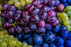 крупный план предпосылки осени красит красный цвет листьев плюща померанцовый Разнообразия виноградины другого цвета Стоковые Фотографии RF