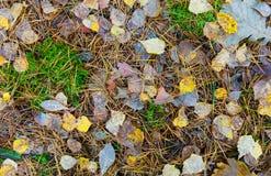 крупный план предпосылки осени красит красный цвет листьев плюща померанцовый упаденные листья земли Стоковая Фотография RF