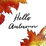 крупный план предпосылки осени красит красный цвет листьев плюща померанцовый Вручите вычерченные дубы и клены листья, текст здра Стоковое Изображение