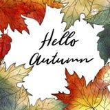 крупный план предпосылки осени красит красный цвет листьев плюща померанцовый Вручите вычерченные дубы и клены листья, текст здра Стоковые Изображения