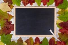 крупный план предпосылки осени красит красный цвет листьев плюща померанцовый Классн классный и мелок Рамка покрашенных листьев к стоковое фото