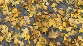 крупный план предпосылки осени красит красный цвет листьев плюща померанцовый Вращая съемка желтых упаденных кленовых листов осен видеоматериал