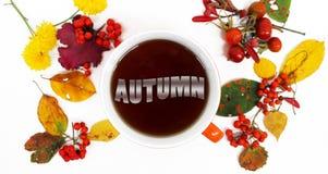 крупный план предпосылки осени красит красный цвет листьев плюща померанцовый Красочные листья, ` осени ` слова в чае и redberrie Стоковая Фотография