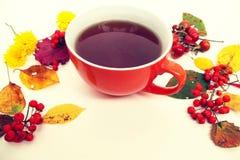 крупный план предпосылки осени красит красный цвет листьев плюща померанцовый Красочные листья, чай и ягоды красного цвета Стоковое Изображение