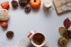 крупный план предпосылки осени красит красный цвет листьев плюща померанцовый Руки держа чашку чаю, украшение осени на серой пред Стоковая Фотография RF