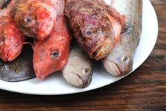 Крупный план рыб моря Стоковая Фотография RF