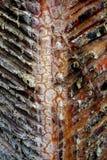 Крупный план сбора Шеврона датчика сока сосны стоковые изображения rf