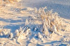 Крупный план сосулек вися от ветви покрыл в льде от шторма льда зимы Стоковая Фотография