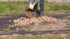 Крупный план старухи в саде лить из ведра картошек кучи акции видеоматериалы