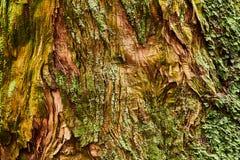 Крупный план ствола дерева стоковые изображения