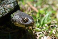 Крупный план стороны черепахи стоковое фото rf