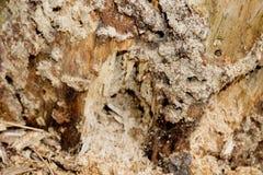 Крупный план текстуры древесины поврежденной термитом стоковые изображения rf