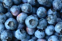 Крупный план толстеньких органических свежих выбранных голубик Стоковое Изображение RF