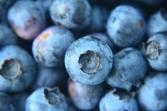Крупный план толстеньких органических свежих выбранных голубик Стоковая Фотография
