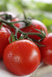 Крупный план томатов вишни на лозе Стоковые Фотографии RF
