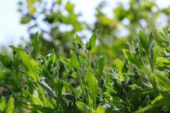 Крупный план травы леса в вертепе лета солнечном Текстура травы для предпосылки Крупный план фото листьев Стоковые Изображения