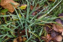 Крупный план уровня земли снял лезвий зеленой травы с падениями дождя Стоковые Изображения RF