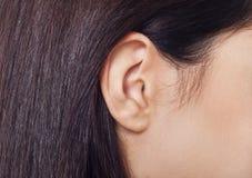 Крупный план уха молодой женщины Стоковая Фотография