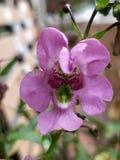 Крупный план цветка орхидеи Стоковое Изображение RF