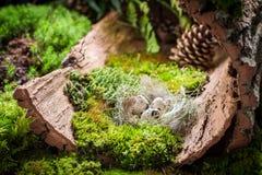 Крупный план яичек для пасхи в лесе на мхе Стоковое Изображение