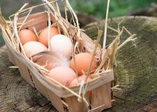 Крупный план яичка в корзине Взгляд сверху яичек в шаре фокус 2 коричневых яичек первый Стоковая Фотография