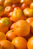 крупный план clementines Стоковые Фотографии RF