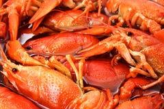 Крупный план Crayfish Стоковая Фотография RF
