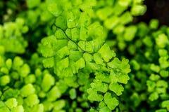Крупный план detal малых листьев Свежий и славный цвет Стоковое Изображение RF