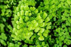 Крупный план detal малых листьев Свежий и славный цвет Стоковое Изображение