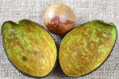 Крупный план авокадоа косточки Стоковые Фотографии RF