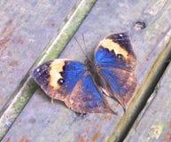 Крупный план бабочки в саде Стоковая Фотография RF