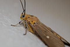 Крупный план бабочки Стоковые Фотографии RF