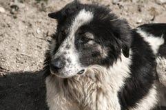 Крупный план бездомной собаки Стоковые Изображения