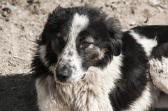 Крупный план бездомной собаки Стоковая Фотография