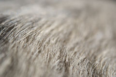 Крупный план белого меха собаки Стоковое фото RF
