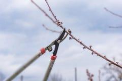 Крупный план весны, подрезать фруктовых дерев дерев Стоковые Изображения RF