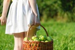 Крупный план винтажной корзины с органическими яблоками в руках женщины Лето сбора сада outdoors Женщина держа большую корзину f Стоковое Изображение RF