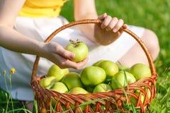 Крупный план винтажной корзины с органическими яблоками в руках женщины Лето сбора сада outdoors Женщина держа большую корзину f Стоковые Фотографии RF