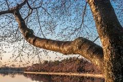 Приливный тазик весной Стоковая Фотография