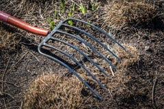 Крупный план вилы кладя в грязь с зеленой травой в предыдущей весне Стоковое Изображение