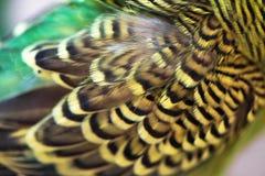 Крупный план волнистого попугайчика крыла оперения Стоковые Изображения RF