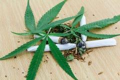 Крупный план высушенной марихуаны Стоковое Изображение