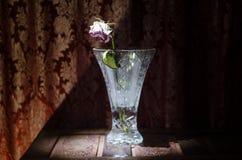 Крупный план вянуть и высушенных розовых и желтых лепестков розы на черноте Стоковая Фотография
