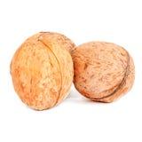 Крупный план грецких орехов изолированный на белизне Стоковое Изображение RF