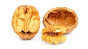 Крупный план грецких орехов изолированный на белизне Стоковые Изображения