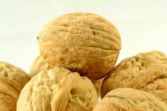 Крупный план грецкого ореха Стоковые Фото
