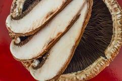 Крупный план гриба portabello Стоковые Фотографии RF