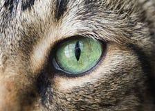 Крупный план глаза кота стоковая фотография
