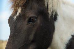 Крупный план глаза лошади стоковые изображения